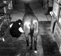 12.14. Место ухода за лошадьми