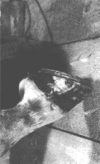 8.6. Дерево, принимая на себя удар лошадиного копыта, уменьшает риск повреждения ноги лошади