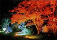 Цветное освещение Боуден-сквера в Саутхэмптоне, Нью-Йорк