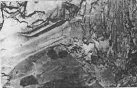 Рис. 14. Микроструктура цементного камня с добавкой С-З+СДБ