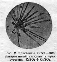 Рис. 2. Гидратированный ангидрит в присутствии K2SO4