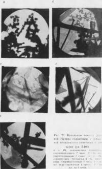 Рис. 26. Препараты цемента разной степени гидратации